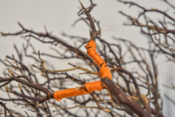 Branches bound with orange cord